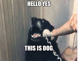 hello this is dog. hello yes this is dog n
