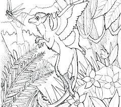 Forest Coloring Pages Forest Coloring Pages Temperate Hidden Org