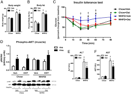 osteocalcin protects against nonalcoholic steatohepatitis in a body weight a and percent body fat b of middle aged