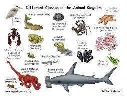 Animal Groups Science Edus Note
