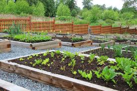 communal vegetable garden boxes encompassed by garden brown fence panels