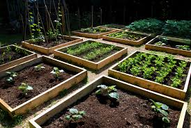 an open area vegetable gardening for beginners