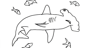 Small Picture Hammerhead Shark Coloring Page Samantha Bell