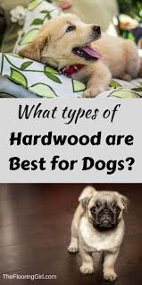 Best hardwood floors for dogs Engineered Hardwood What Tyes Of Hardwood Are Best For Dogs Which Hold Up The Best Urban Floor Best Hardwood Flooring For Dogs Furry Friends Pinterest