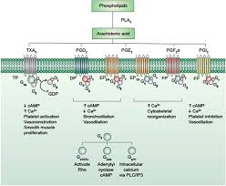 Gpcr Signaling Effects Of Post Translational Modifications On Membrane