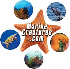 Get Marine Biology Jobs - Home | Facebook