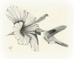 hummingbirds and flowers drawing. Perfect Hummingbirds Amazing Pencil Drawings Flowers  Drawing Sketch Art Wildlife Bird Hummingbird  Flower Hibiscus Pencil  On Hummingbirds And Drawing Pinterest