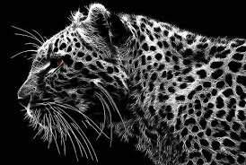 on snow leopard canvas wall art with majestic side on leopard print canvas wall art black white 30x20