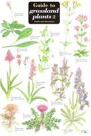 Herb Plant Identification Chart Guide To Grassland Plants 2 Chalk And Limestone