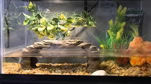 Turtle Tank Decor Turtle Tank 10 Gallon Update Youtube
