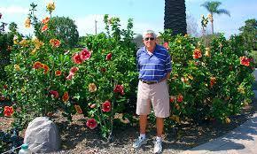 hibiscus garden in the orange county
