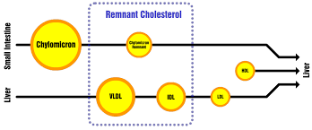 Hdl Ldl Chart Remnant Cholesterol What Every Low Carber Should Know