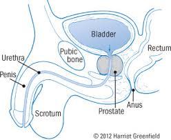 Prostate Specific Antigen Blood Test Psa Test Harvard Health