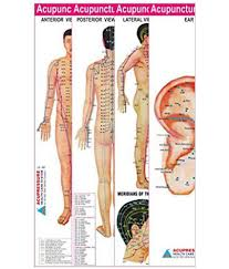 Fresh Acupuncture Meridian Chart Michaelkorsph Me
