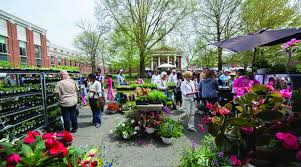 leesburg celebrates spring with flower and garden festival