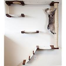 wall mounted cat furniture. Simple Mounted CatastrophiCreations Cat Mod Climb Track Handcrafted Wall Mounted Tree  Shelves English ChestnutNatural Inside Mounted Furniture Amazoncom