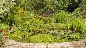 best pond plants keep your pond