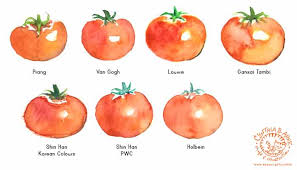 Tomato Color Chart Tomato Watercolor At Paintingvalley Com Explore Collection