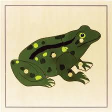 Parts Of A Frog Montessori Materials Parts Of A Frog Puzzle