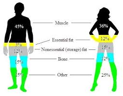Men S Body Fat Chart What Is A Body Fat Percentage Of 30 On A Woman Equivalent