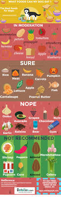diabetes food menus best 25 diabetic dog food ideas on pinterest diabetic dog 3