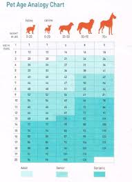 Dog Years Chart To Human Years Aging Chart How Old Is Your Pet In Human Years