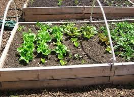 it s garden time raised bed versus earth gardening