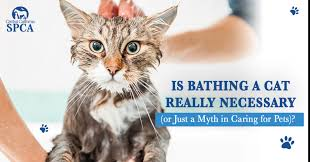 is bathing a cat really necessary or