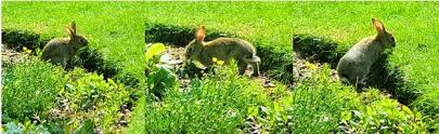how to keep groundhogs out of my garden. Gardening Tips: Keep Animals Out Of The Garden How To Groundhogs My