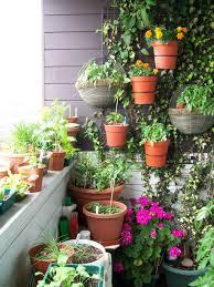 Small Patio Garden Plants