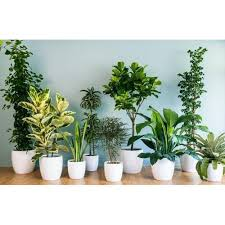 Image Realistic Office Decorative Plant Indiamart Office Decorative Plant Decorative Plant Green Wood Herbs