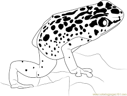 Small Picture Blue Poison Dart Frog Coloring Page Free Frog Coloring Pages
