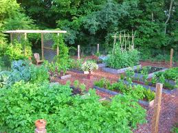 Small Picture 30 best Garden design images on Pinterest Vegetables garden
