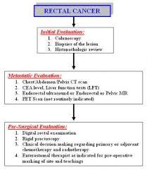 Rectal Cancer Practice Essentials Background Anatomy