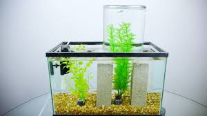Fish Tank Its Not An Impossible Fish Tank Its Just Physics Wired