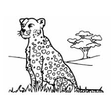 Leopard Coloring Pages At Getdrawingscom Free For Personal Use