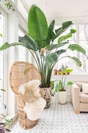 Elegant Large Indoor Plant Living Room