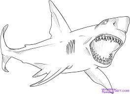 Small Picture Great White Shark coloring sheet drawings Pinterest Shark