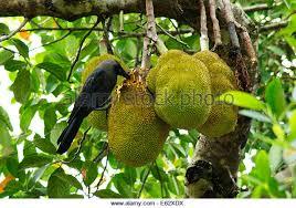 8 Fruit Trees You Can Grow Right On Your Balcony  Rodaleu0027s Kerala Fruit Trees