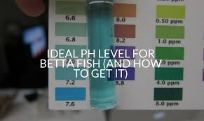 Ideal Ph Level For Betta Fish And How To Get It Betta