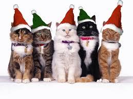 cute animal christmas backgrounds. Modren Animal Christmas Cats  Red Christmas Holiday Kitty Cat Cute Santa With Cute Animal Backgrounds