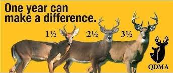 Whitetail Antler Growth Chart Buck Growth Chart Quality Deer Management Let Them Grow
