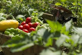 garden food. Home Garden With Fruits And Vegetables Food