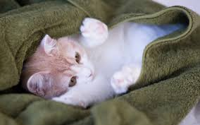 sweet cat love. Plain Cat Sweet Cat  One Reason That Kittens Sleep So Much Is Because A Growth  Hormone Released Only During Sleep To Love