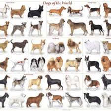 Kinds Of Dogs Chart Dogs Of The World Popular Breeds Chart Poster 36 X 24