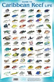 Coral Reef Fish Species Fish Chart Reef Aquarium
