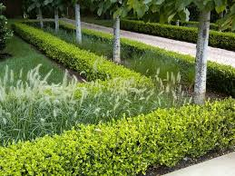 Small Picture 74 best Hedging Topiary Espalier images on Pinterest Formal