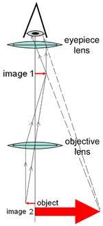Types Of Microscopes Chart Optical Microscope Wikipedia