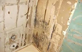 orange mold in bathroom orange mold in shower lovely mold on bathroom walls and behind shower