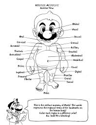 Small Picture Anatomy Coloring Pages Free esonme